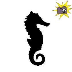 Patron livre plié hippocampe