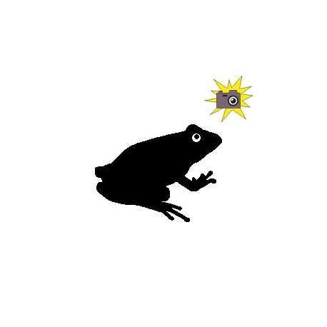 Patron livre plié grenouille