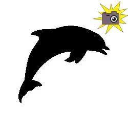 Patron livre plié dauphin