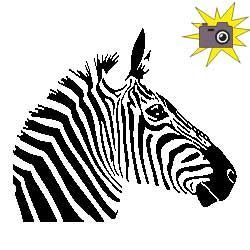 Custom cut'fold pattern zebra head