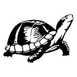 Patron livre plié tortue terrestre