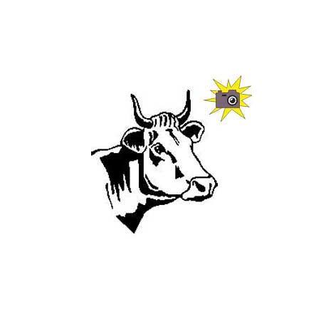Patron découp'pliage tête de vache